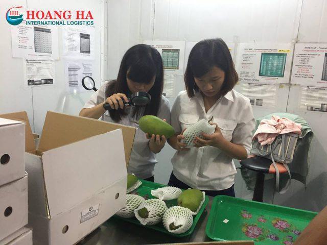 http://hoangha.com/wp-content/uploads/2016/09/xoai-tuoi-xuat-sang-uc-hil-1-640x480.jpg
